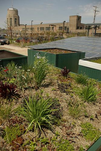 Cubierta vegetal de edificios adaptada a clima seco