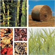 Fuentes de biocombustibles de segunda generación