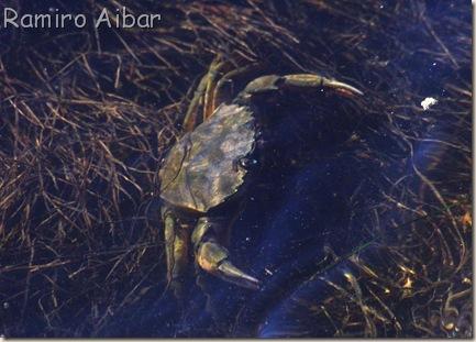 un cangrejo