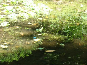 Garrafa plástica jogada no Parque da Aclimação.