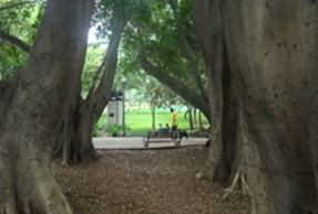 Parque Buenos Aires. Foto: Gladstone Barreto