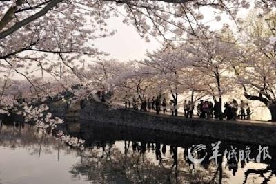 春树春花春水春耕 共赏生动的三月春色