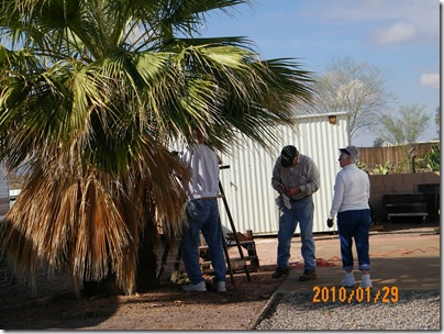 Heather and Frank bought this lot and Slim is helping them trim the palm tree