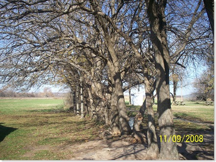 row of Bois d'arc trees at Little House on the Prairie