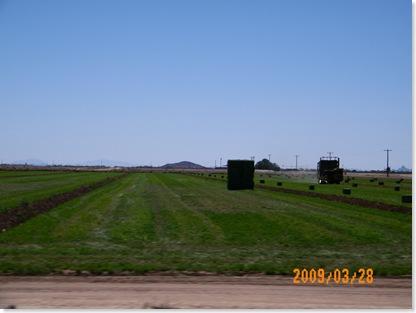 alfalfa hay being baled