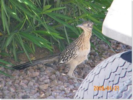 you better leave those quail alone