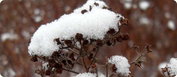 sne januar 2010