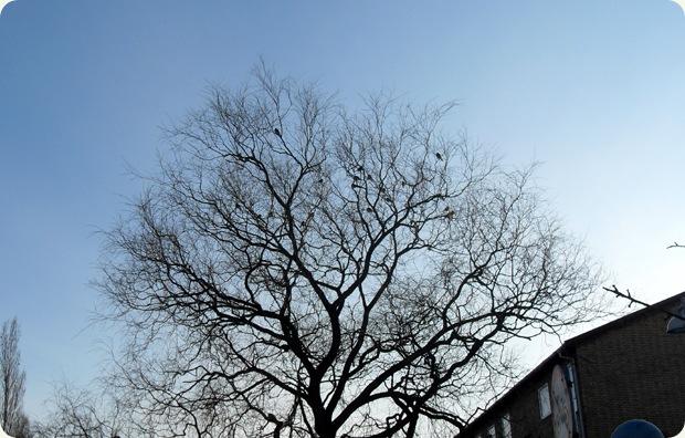 fugle i træets top