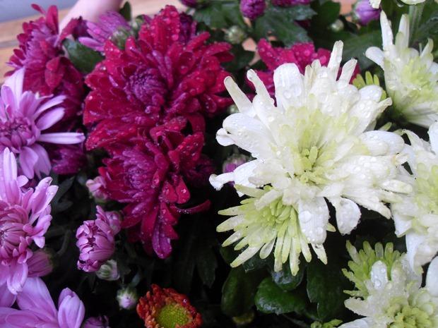 glade blomster