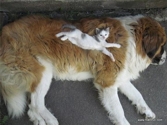 動物的快樂生活