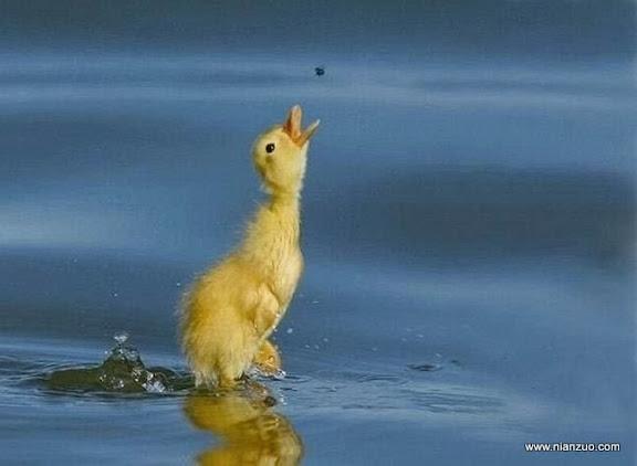 動物的快樂生活 蒼蠅是美食