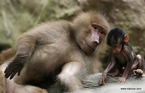 動物的快樂生活 孩子,給你講個故事