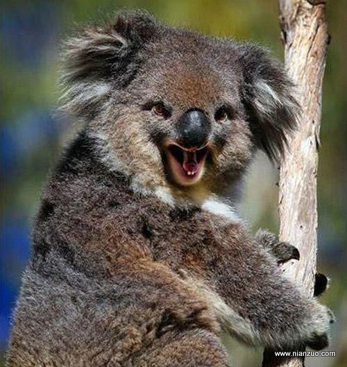 動物的快樂生活 太好笑了