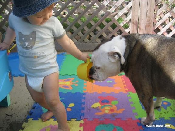 孩子和宠物