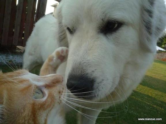 可爱的动物 无视
