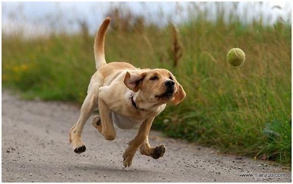 可爱的动物 我狂追!