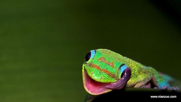 可爱的动物 没有眼睑,就用舌头。