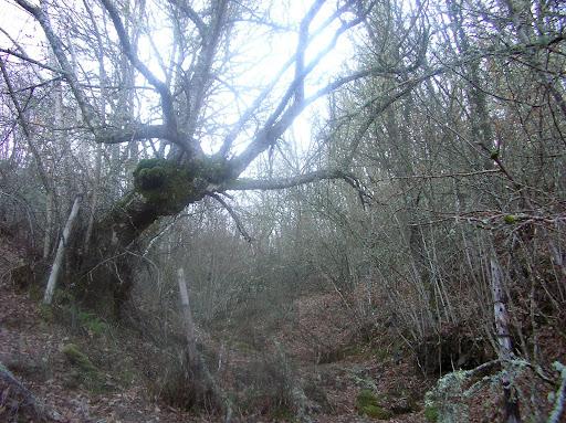 Imágenes de bosques  y paisajes tenebrosos