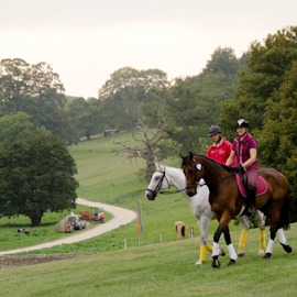 Horse Trial by Sanil Photographys - Sports & Fitness Other Sports ( blenheim palace, horse, sports, palace )