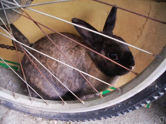 BicycleBunny3