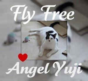 yuji-run-free