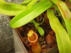 Basal Harvest Pics