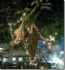 tree_india_night