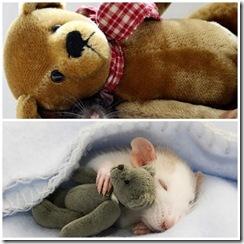 ratinhos_lindos2