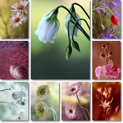 http://lh4.ggpht.com/_PQcPYfGhKuY/TZCpC3y8JUI/AAAAAAAABfs/E6UqDxXDsTY/flowers%20wallpapers.JPG