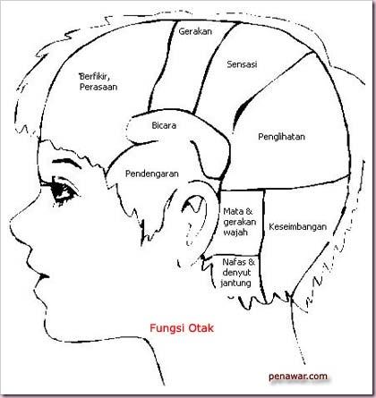 fungsi_otak