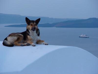 Santorini dogs