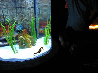 Exploring The Underwater Adventures Aquarium At The Mall