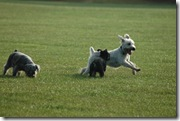 Dogs on Run 4x6 Low Res