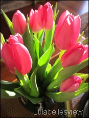 Tulips and Sunlight 1