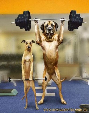 Funny Dogs Lifting Weights