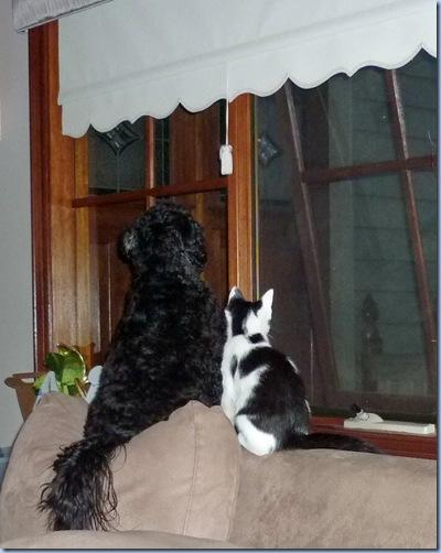 molly&kitty2