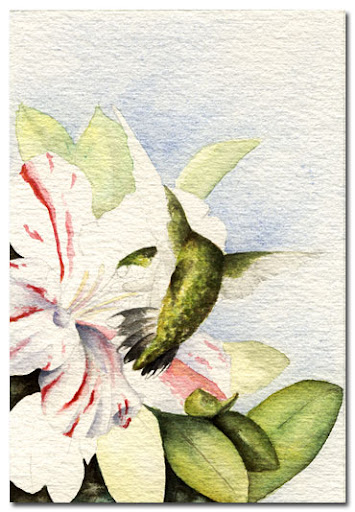 watercolour hummingbird painting