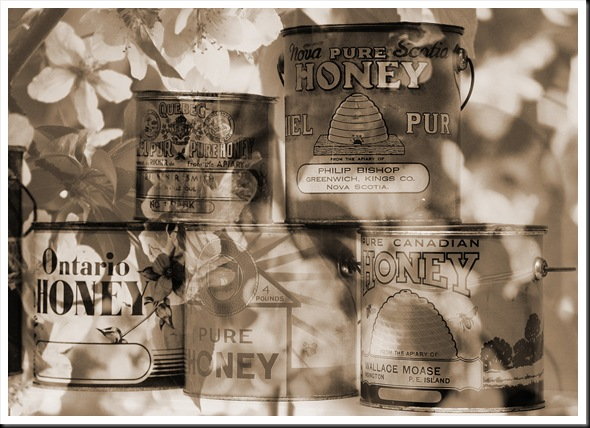 Where Honey Comes From