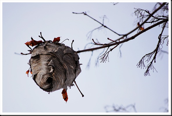hornet nest
