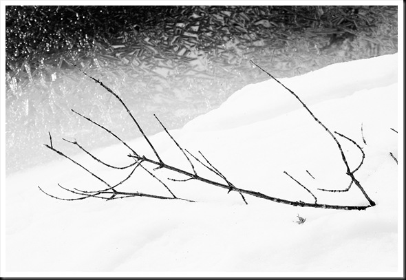branch ice BW