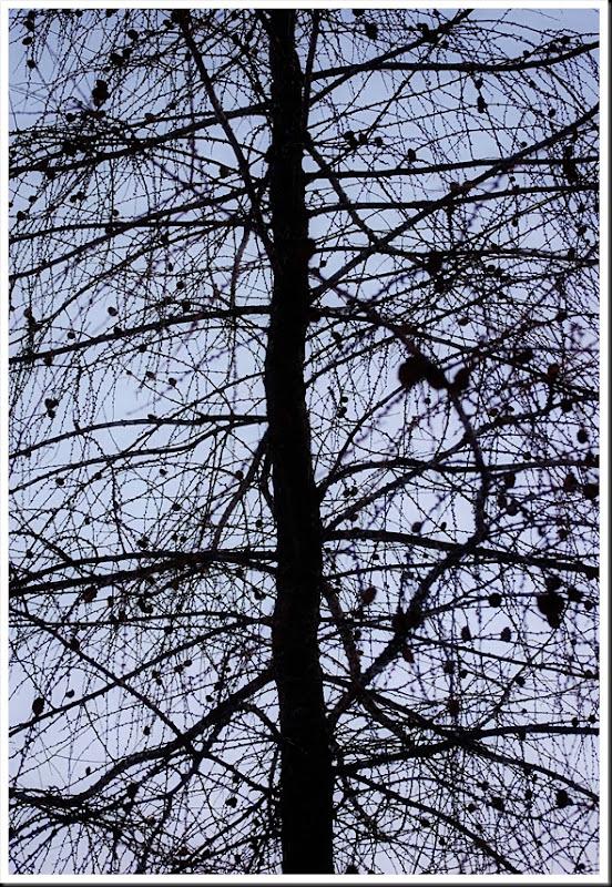 pine silhouette2