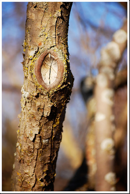 Tree Knot Lichen Bokeh