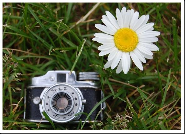 Camera and Daisy 2