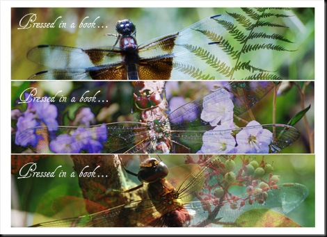 Dragonfly (text) Smaller
