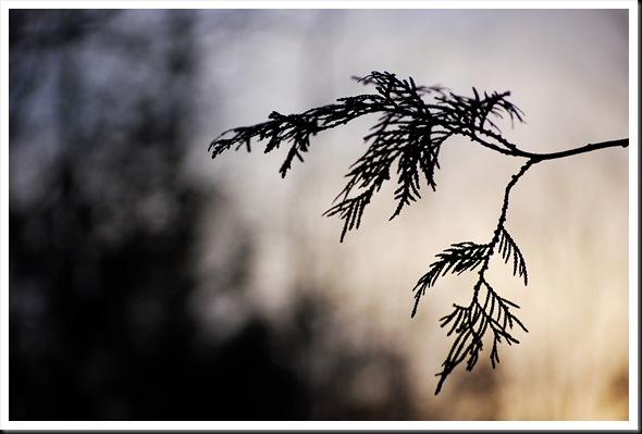 Branch silhouette 4