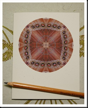 MANDALA CARDS MORPHO WHOLE