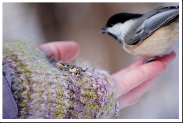 chickadee hand