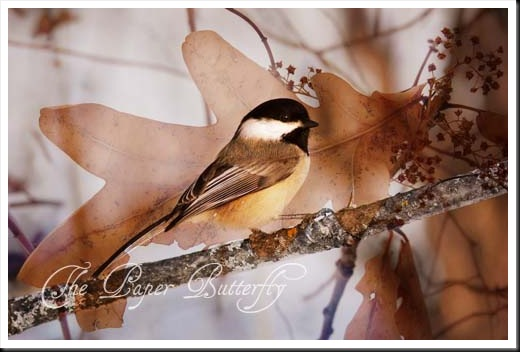 WINTER CHICKADEE OAK 46 WM