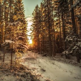 Peaceful walk by Rose-marie Karlsen - Landscapes Sunsets & Sunrises ( winter, sunset, snow, landscape, light, norway )