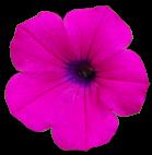 flower015